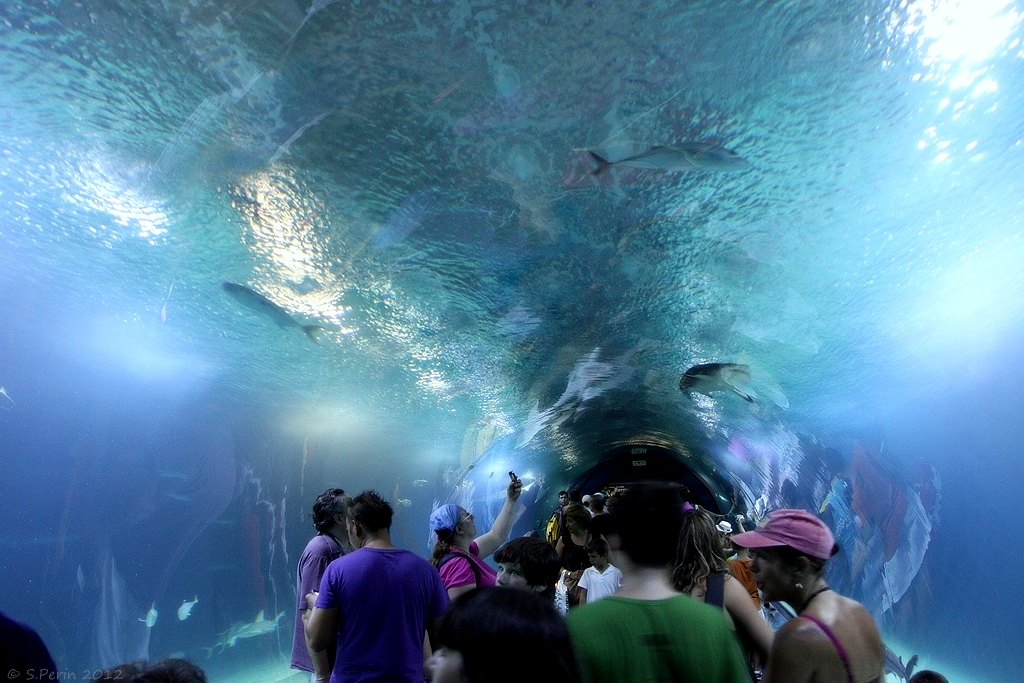 aquarium de valence espagne canon 500d sigma 17 70. Black Bedroom Furniture Sets. Home Design Ideas