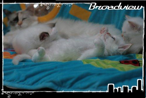 Les bébés de Foxy et Pepper - Page 2 2012_07_27_jack6-36bf385