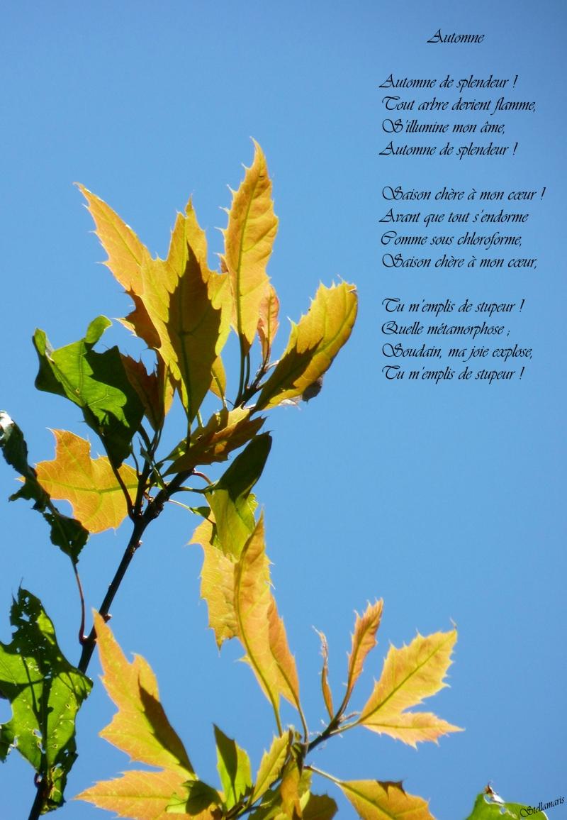 Automne / / Automne de splendeur ! / Tout arbre devient flamme, / S'illumine mon âme, / Automne de splendeur ! / / Saison chère à mon cœur ! / Avant que tout s'endorme / Comme sous chloroforme, / Saison chère à mon cœur, / / Tu m'emplis de stupeur ! / Quelle métamorphose ; / Soudain, ma joie explose, / Tu m'emplis de stupeur ! / / Stellamaris