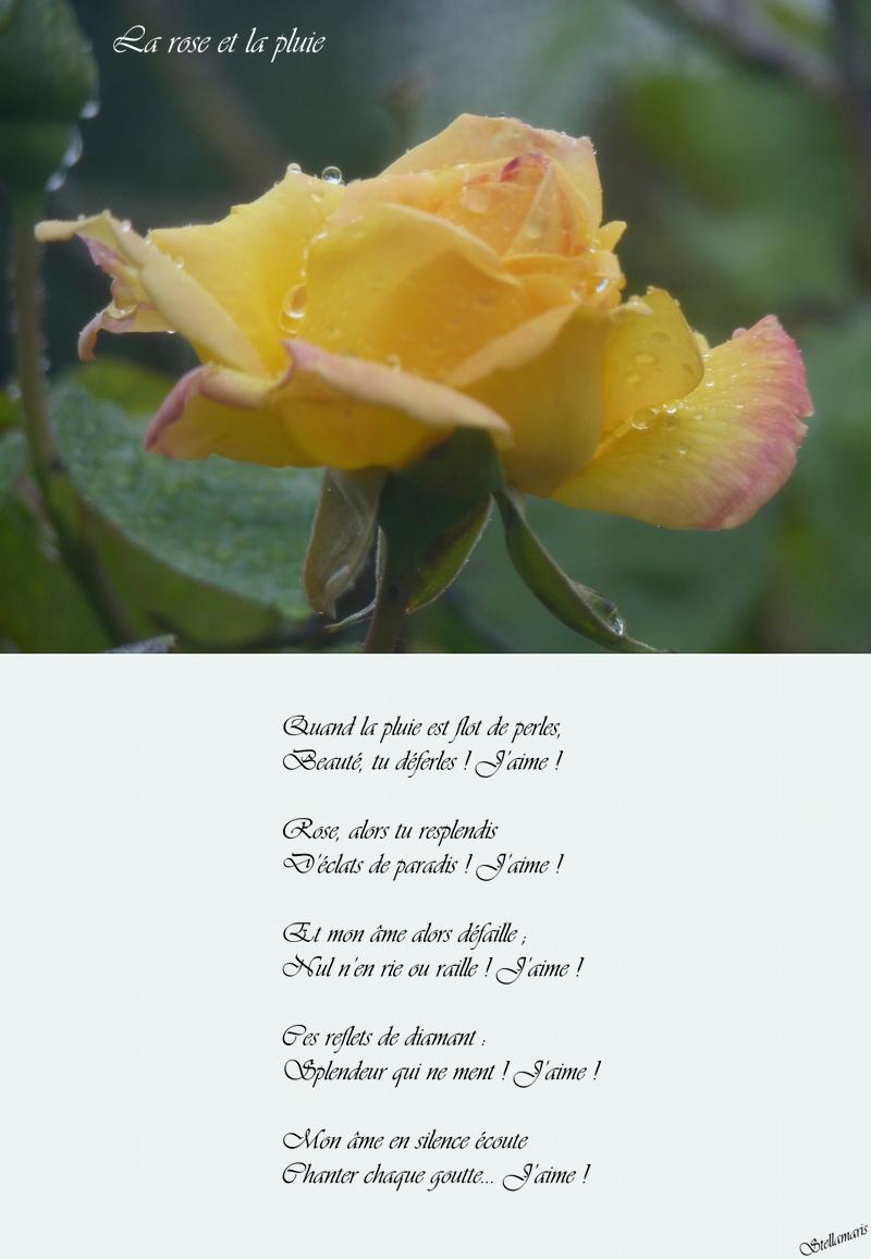 La rose et la pluie / / Quand la pluie est flot de perles, / Beauté, tu déferles ! J'aime ! / / Rose, alors tu resplendis / D'éclats de paradis ! J'aime ! / / Et mon âme alors défaille ; / Nul n'en rie ou raille ! J'aime ! / / Ces reflets de diamant : / Splendeur qui ne ment ! J'aime ! / / Mon âme en silence écoute / Chanter chaque goutte... J'aime ! / / Stellamaris