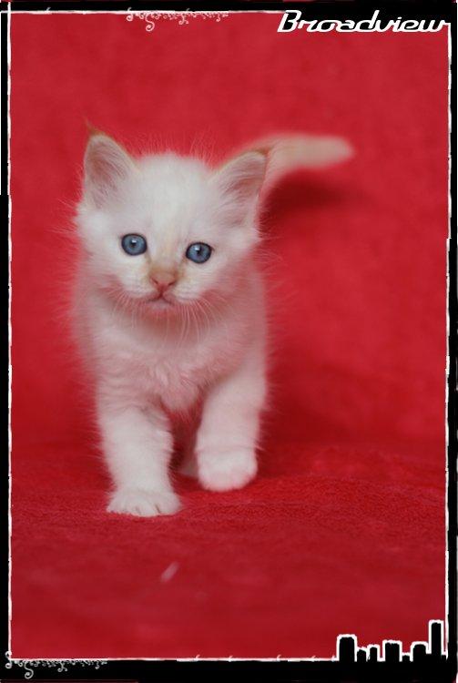 Les bébés de Foxy et Pepper - Page 2 2012_07_27_jack3-36bf355
